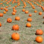 Ideas for Fall Festival at Church